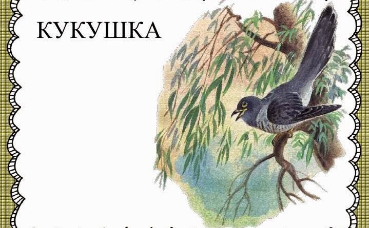 интересное о птицах