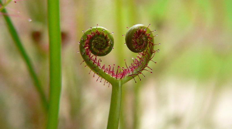 самые хищные растения