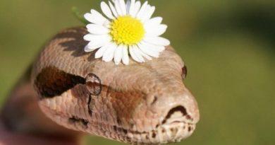 можно ли есть змей