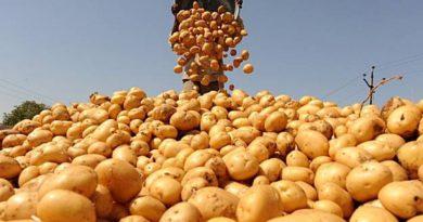 картошка польза как варить