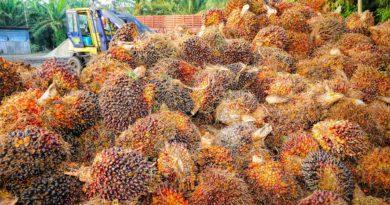 пальмовое масло вред и польза